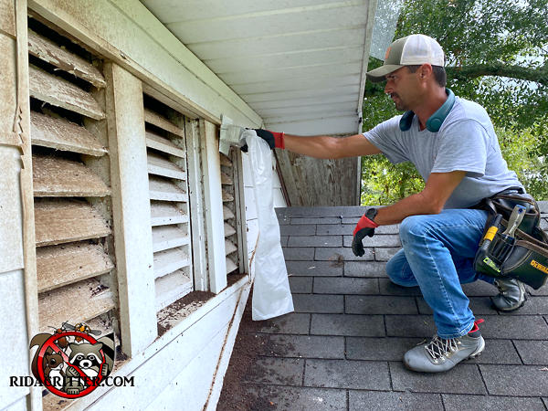 Man on a roof installing one way bat traps over gable vent louvers as part of a Tifton Georgia bat removal and exclusion job.