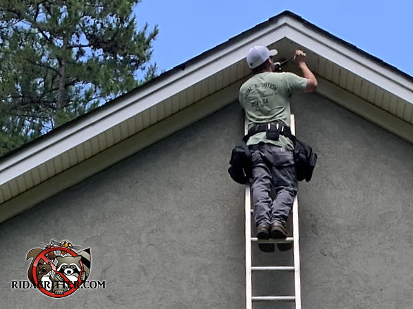 Man on a ladder sealing bats out of the space between the soffit and the stucco exterior walls of a house in Dunwoody Georgia