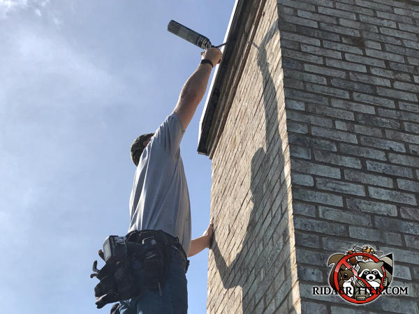 Man on a roof sealing bats out of a chimney cap using sealant