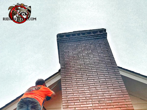 Man on a ladder applying a sealant to the joint between the roof and the brick chimney to keep bats out of the attic of a house in Chattanooga