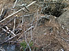 Beaver hole photographed during Atlanta beaver control job