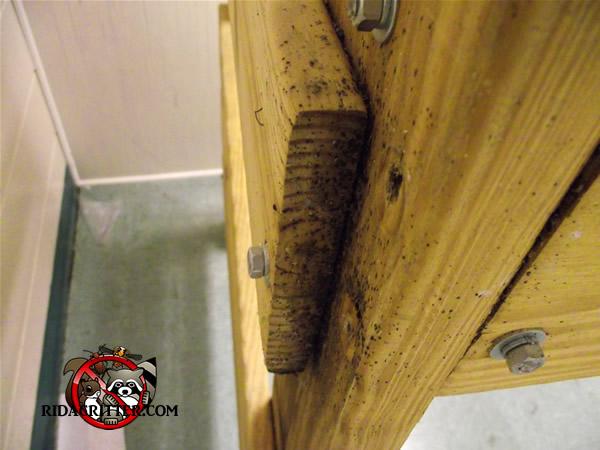 Severe Bedbug Infestation In A Bed Frame