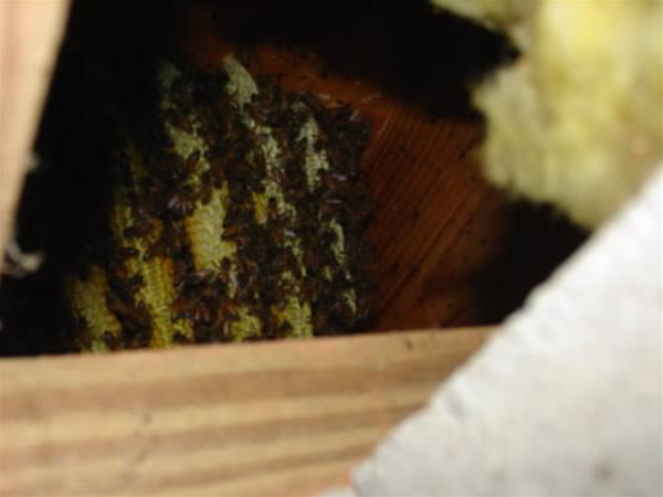 Honey Bee Control North Georgia