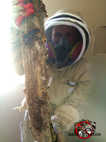Honey Bee Control | North Georgia