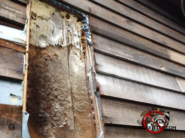 Honey Bee Removal Macon Albany Valdosta Georgia