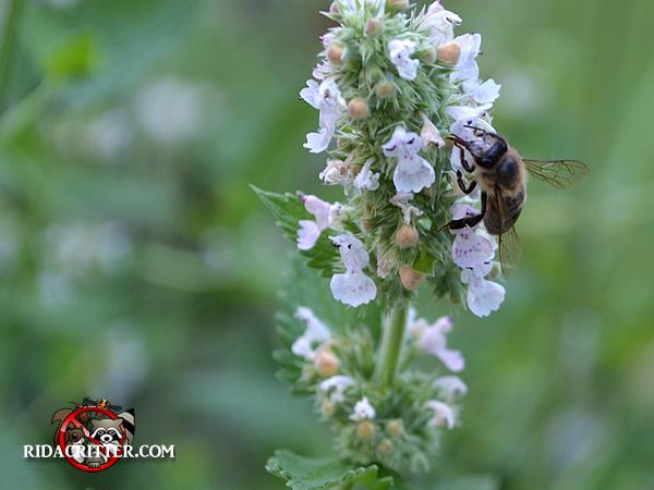 Honey Bee Removal Macon Georgia