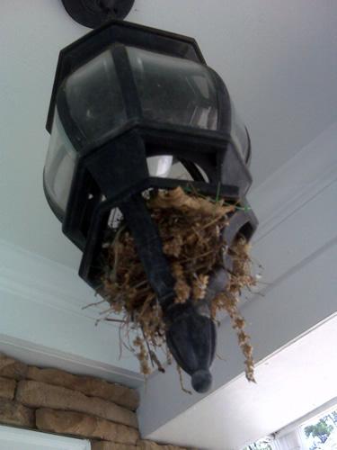 Bird Removal And Control Atlanta Marietta Peachtree City