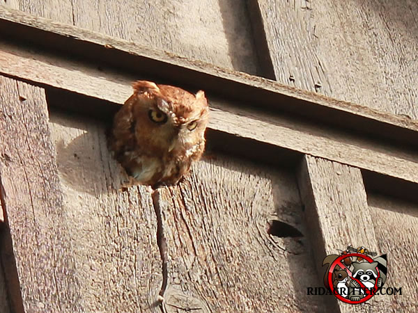 Pest Bird Removal And Control Atlanta Marietta