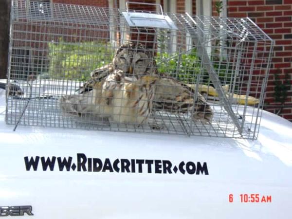 Bird Removal And Bird Proofing Atlanta Marietta