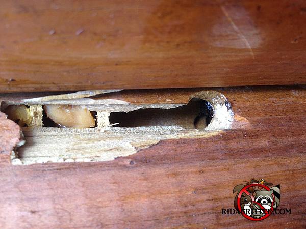 Carpenter Bee Damage At An Atlanta Home