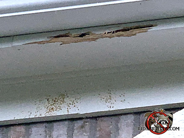 Carpenter bees made extensive tunnels along two feet of the wooden fascia and left stains and frass on the frieze board of a house in Ellenwood Georgia