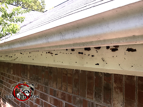 Carpenter Bee Damage To A House In Grayson