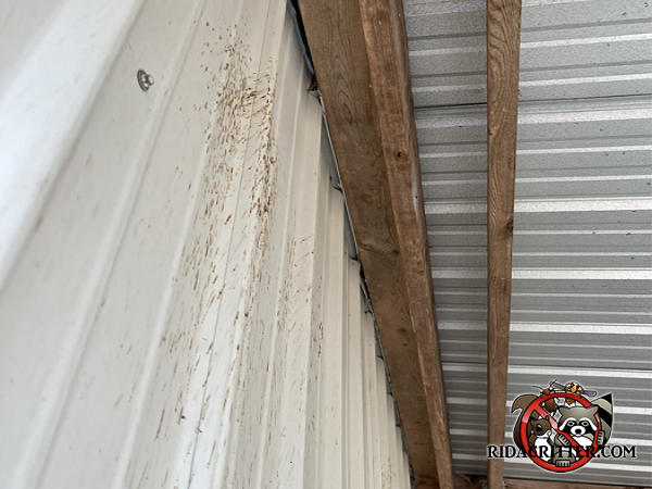 Carpenter bee frass and stains on the exterior wall under a patio roof outside a house in Roberta Georgia.