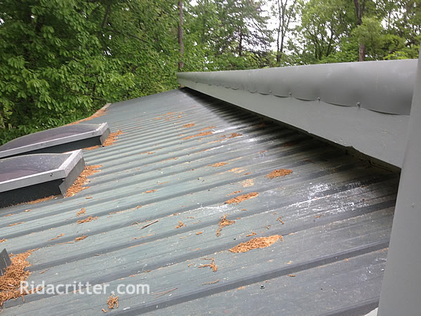Carpenter Bee Damage To A Roof In Fayetteville