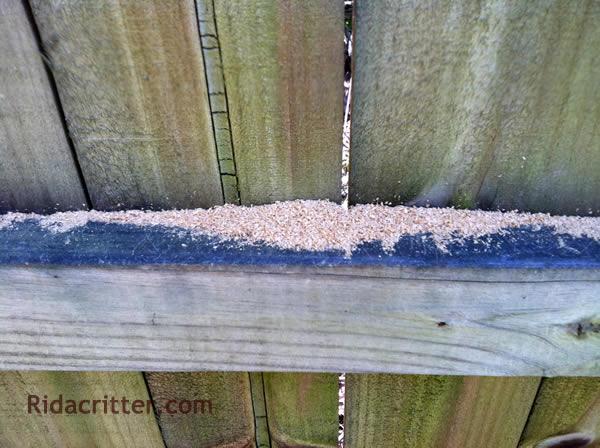 Carpenter Bee Damage To A Fence In Norcross