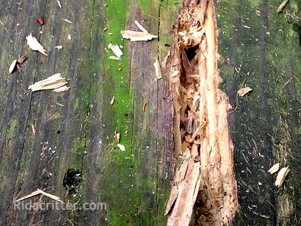 Carpenter Bee Control Alpharetta Roswell North Georgia Ga