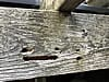 Carpenter bee holes in a weathered wooden beam of the deck of a house in Atlanta
