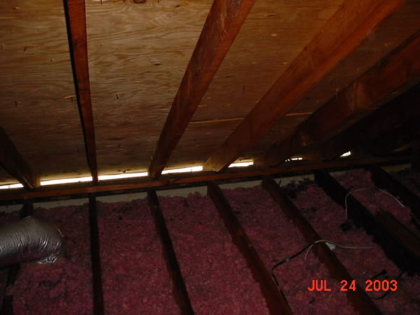 Animal Damage Repair Amp Animal Proofing Macon Albany