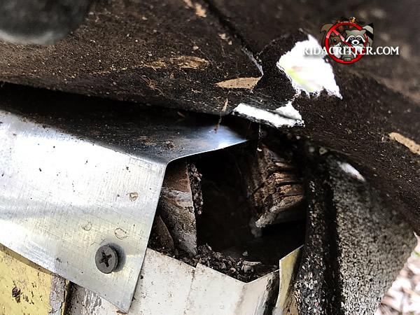 Animal Damage Repair Amp Animal Proofing Atlanta Marietta