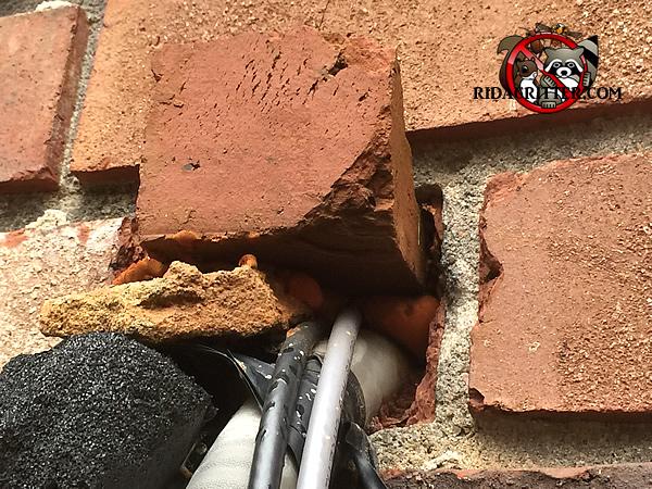 Atlanta Animal Damage Repair Amp Animal Proofing Atlanta
