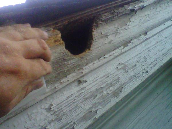 Atlanta Animal Damage Repair Amp Animal Proofing Atlanta Marietta