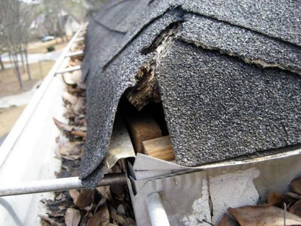 Animal Damage Repair Amp Animal Proofing Atlanta Marietta