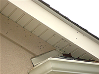 Flies buzzing around a roof soffit by where an animal died inside the home