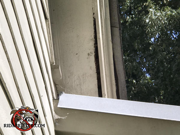 Gap of about an inch at the edge of the soffit panel allowed flying squirrels into a house in Athens Georgia