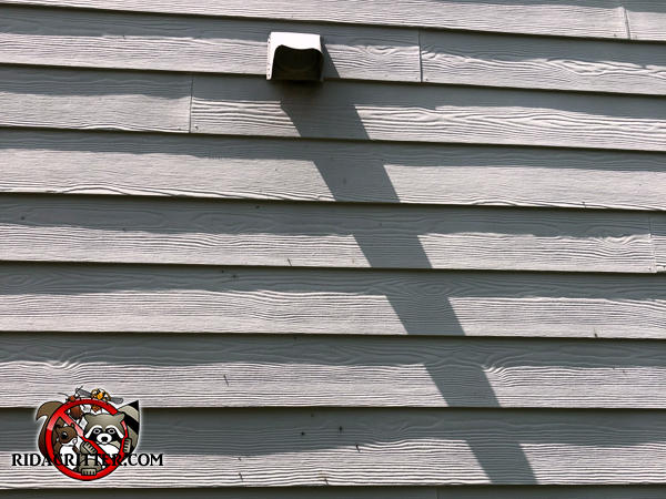 A dryer vent in the outside wall on the second floor of a house in Atlanta allowed flying squirrels to get into the house