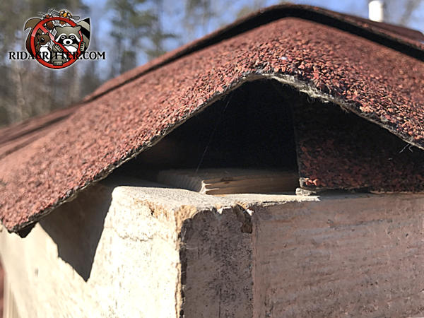 The shingles at the corner at the very top of the house are pushed upwards to form a triangular gap through which flying squirrels got in