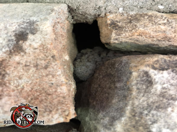The mortar between the stones fell out at a house in Monticello Georgia and flying squirrels got in through the opening