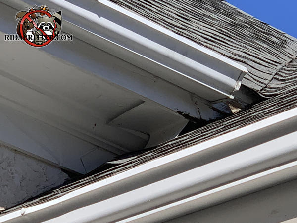 Shoddy roof flashing left a gap through which flying squirrels got into a house in Peachtree City Georgia