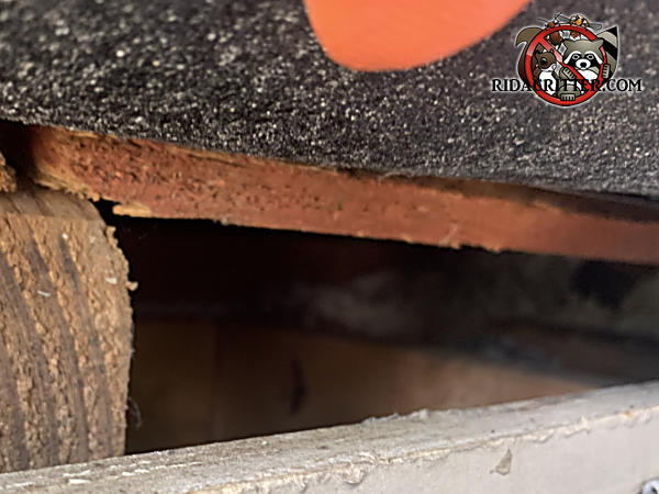 Gap of slightly over an inch in the roof sheathing that allowed flying squirrels into a house in Atlanta