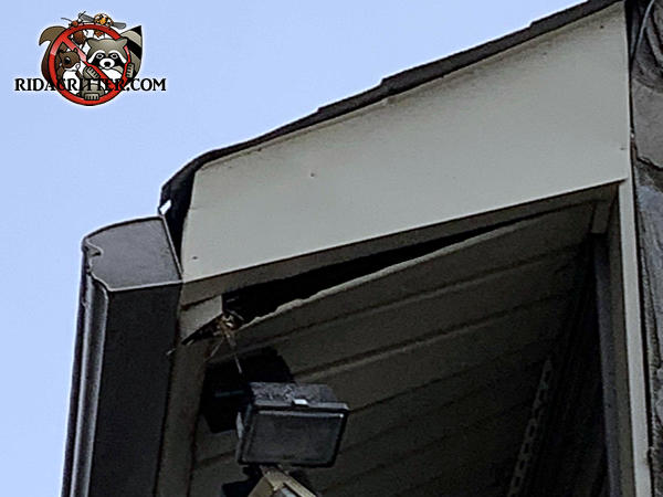 The soffit panel of a house in Atlanta is hanging down a few inches at one corner and flying squirrels got in through the gap