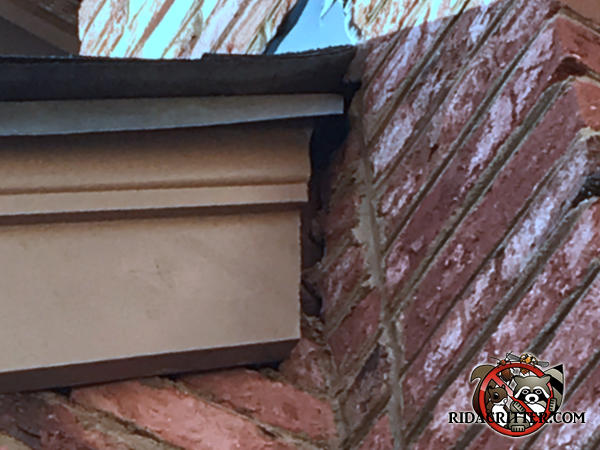 Gap between the roof trim and the brick chimney of a house in Birmingham Alabama allowed flying squirrels into the house