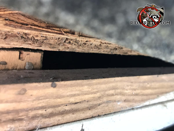 Gap of about half an inch in the edge of the roof allowed flying squirrels into the attic of a house in Chattanooga Tennessee
