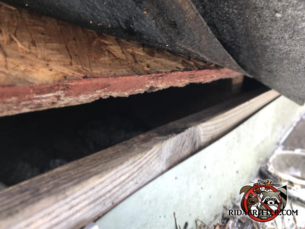 Gap of about an inch between the roof sheathing and fascia allowed flying squirrels into a house in College Park Georgia