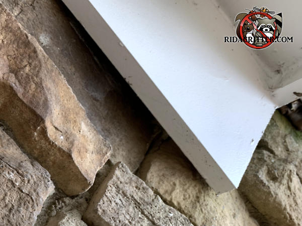 Displaced stone near the roof trim in the wall of a house in Dunlap Tennessee allowed flying squirrels to get into the house