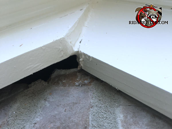 One piece of trim at the peak of the roof is sticking out from the bricks and allowed flying squirrels into the attic of a Hoover Alabama home.