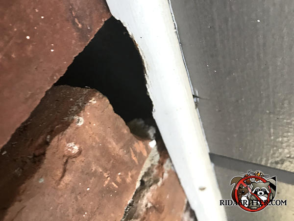 Gap at the top of a brick adjacent to the soffit gave flying squirrels a starting point to gnaw their way into the attic of a Smyrna Georgia home.