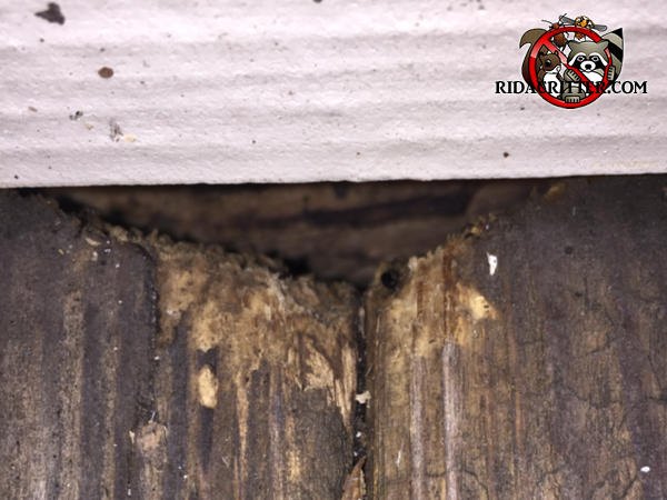 Flying squirrel hole in the siding of a house in Atlanta