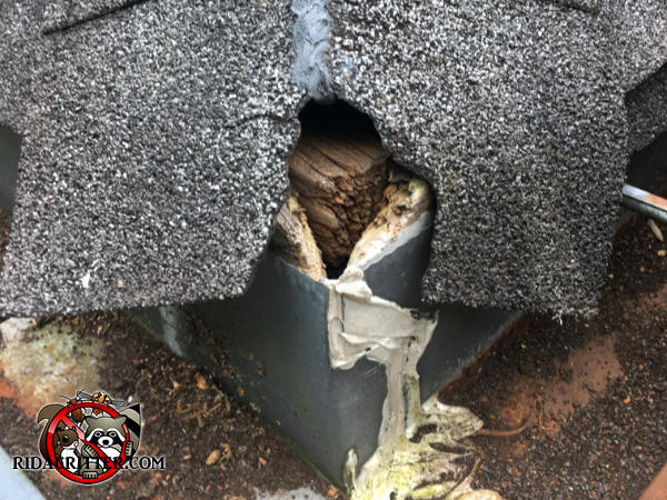 Flying squirrel hole gnawed through the shingles on the corner of the roof and into the attic of a house in Atlanta