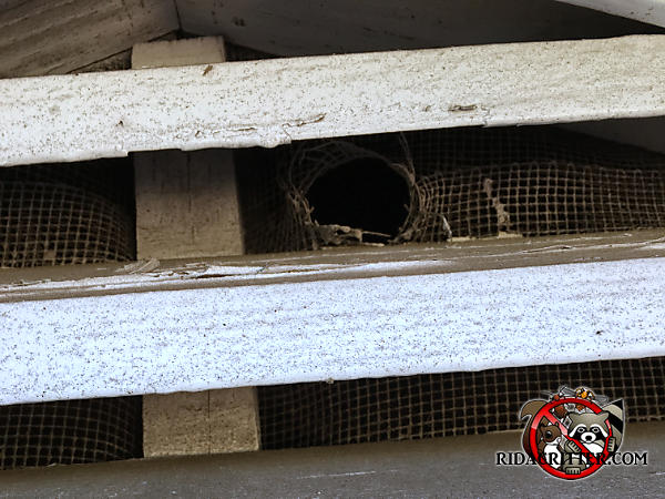 Flying squirrel gnawed a hole through a metal screen behind a gable vent and into the attic of a house in Atlanta
