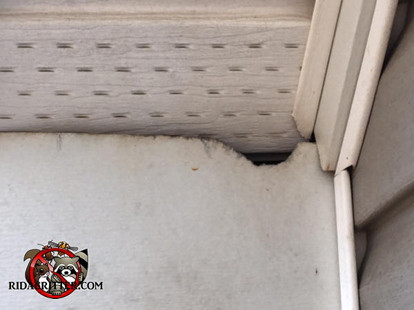 Flying squirrel chewed a small hole where the metal siding meets the soffit panel