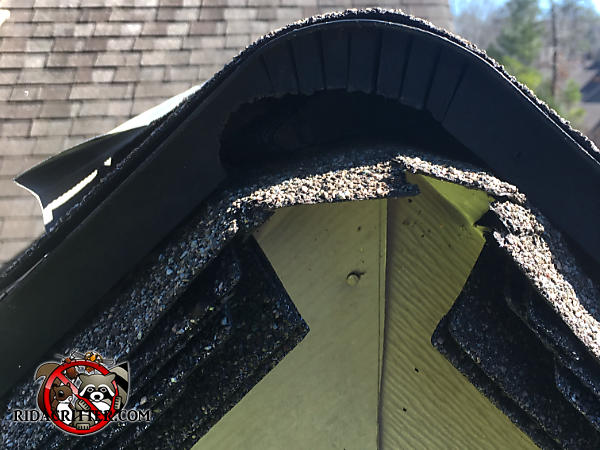 Flying squirrel hole through the plastic ridge cap at the very peak of a house in Johns Creek Georgia