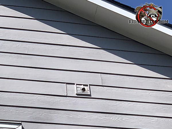 Flying squirrel chewed a hole through a second story dryer vent at a house in Suwanee Georgia