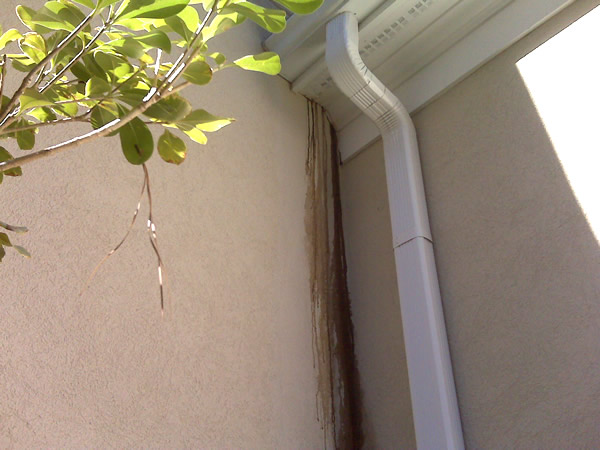 Flying Squirrel Removal Atlanta Peachtree City Marietta