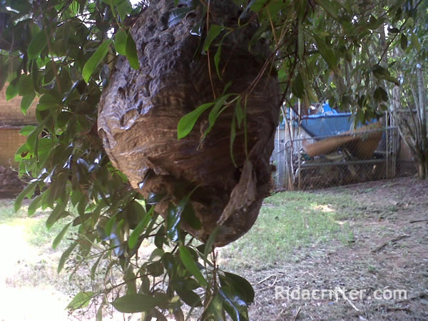 Hornet, Wasp & Stinging Insect Control | Atlanta, Marietta ...