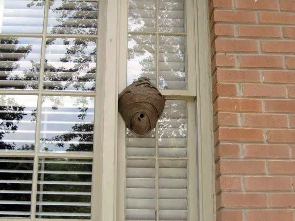 Hornet, Wasp & Stinging Insect Control   Atlanta, Marietta ...