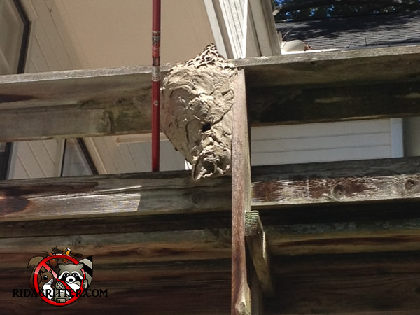 how to get rid of wasp nest under deck